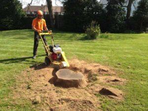 stump removal Lansing MI