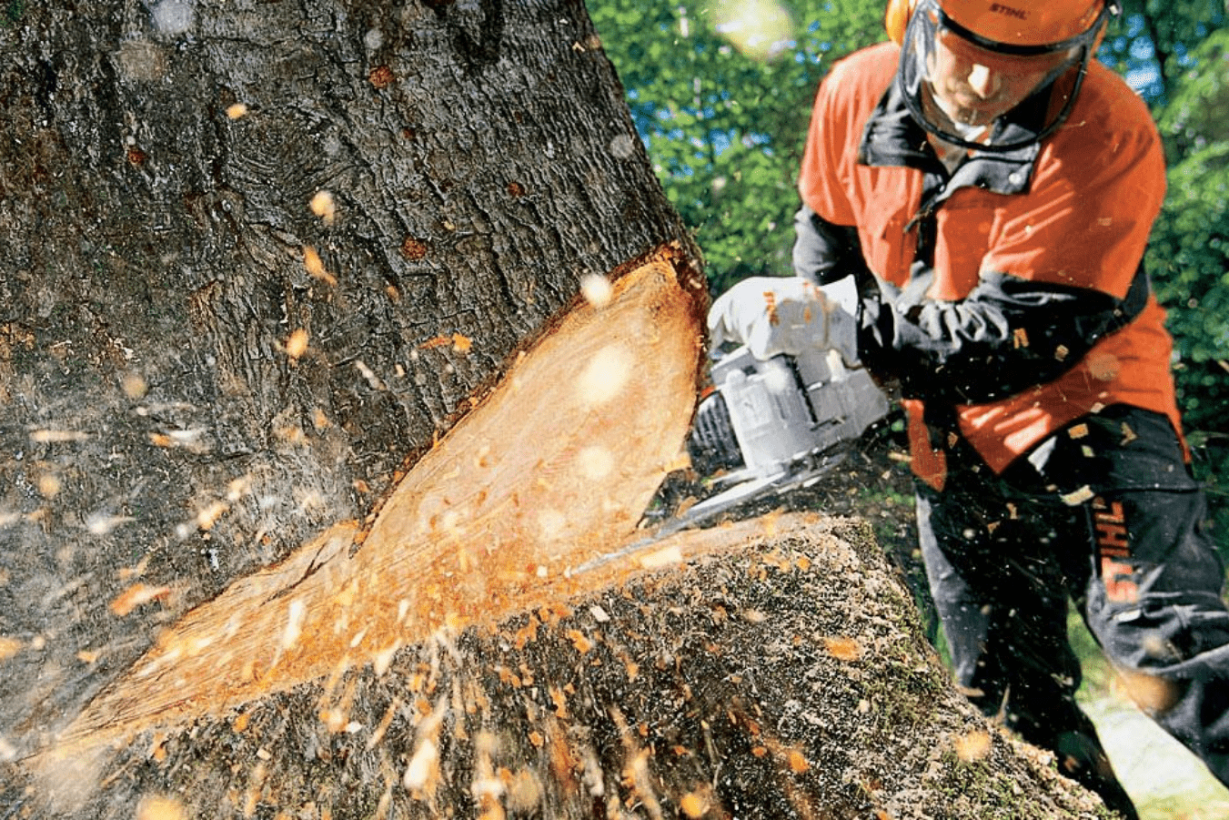 tree removal services in Michigan