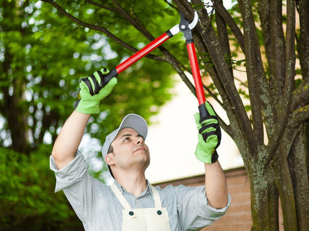 Tree Removal Cost in Lansing, Mi