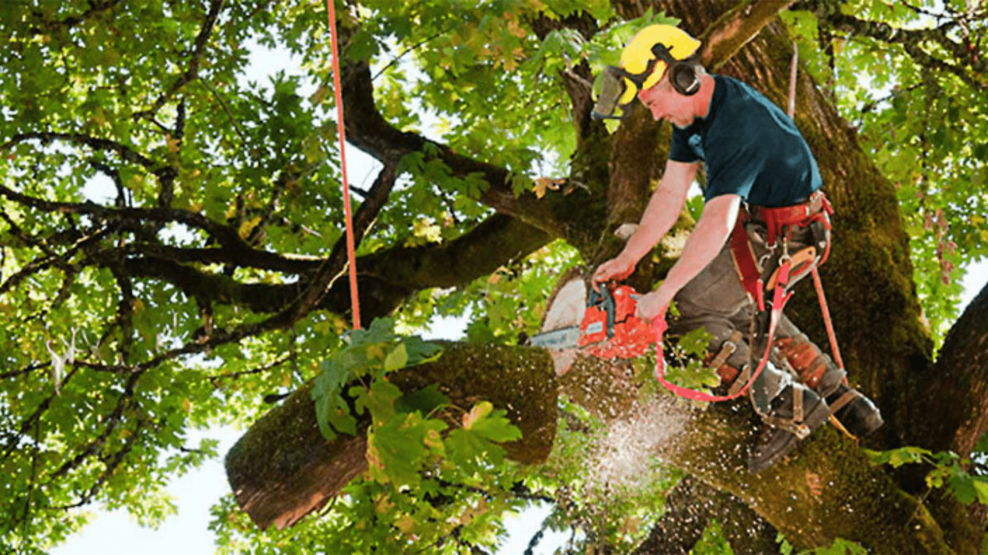 How to find a good tree service company in Lansing Michigan