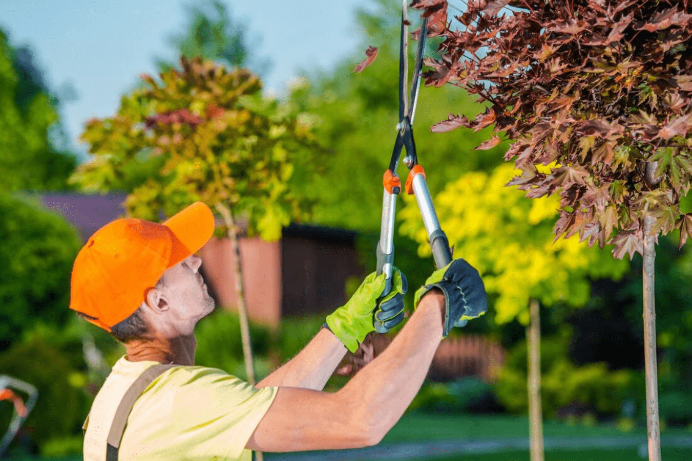 Reason to hire Lansing Tree Service Pros