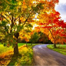 maple trees Michigan