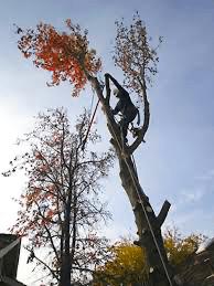 tree removal lansing mi