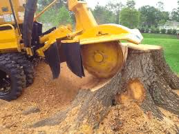 stump grinding lansing mi