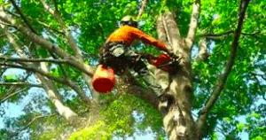 tree trimming mason mi