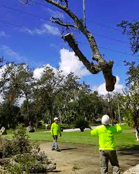 Tree removal Dewitt Michigan