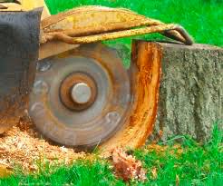 Stump grinding in Dewitt Mi