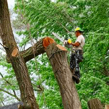 tree service portland